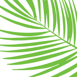 332 Cocoanut green palm frond